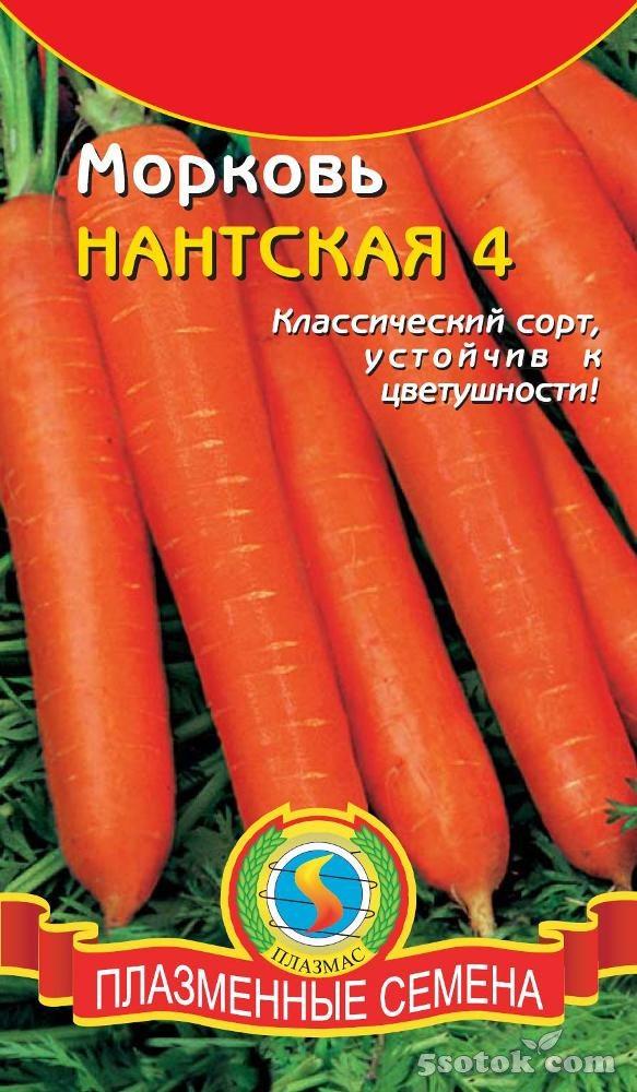 Лучшие сорта моркови для средней полосы, Урала и Сибири